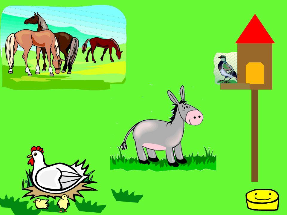 HUSA DOMÁCÍ Samec husy se jmenuje houser, samice je husa a mláďata jsou housátka.