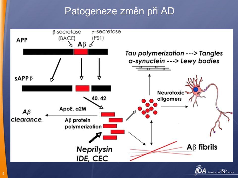 5 Patogeneze změn při AD