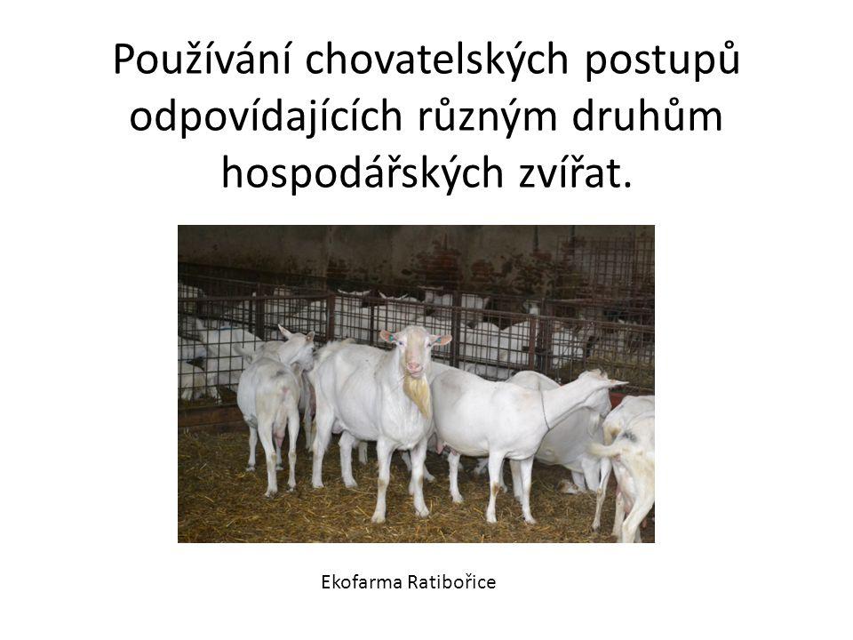 Používání chovatelských postupů odpovídajících různým druhům hospodářských zvířat.