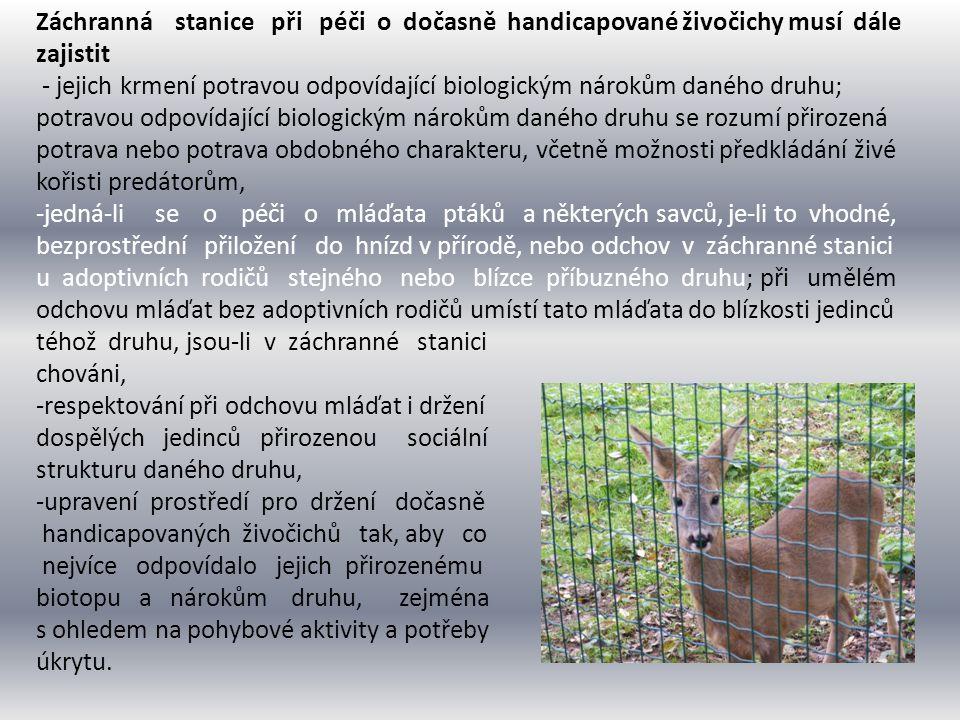 Záchranná stanice při péči o dočasně handicapované živočichy musí dále zajistit - jejich krmení potravou odpovídající biologickým nárokům daného druhu