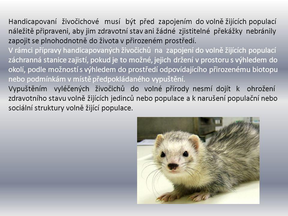 Vypouštět vyléčené živočichy do volné přírody je možné jen v rámci areálu výskytu populace daného druhu, pokud to není možné, pak v oblasti výskytu populace geneticky příbuzné vypouštěným jedincům.