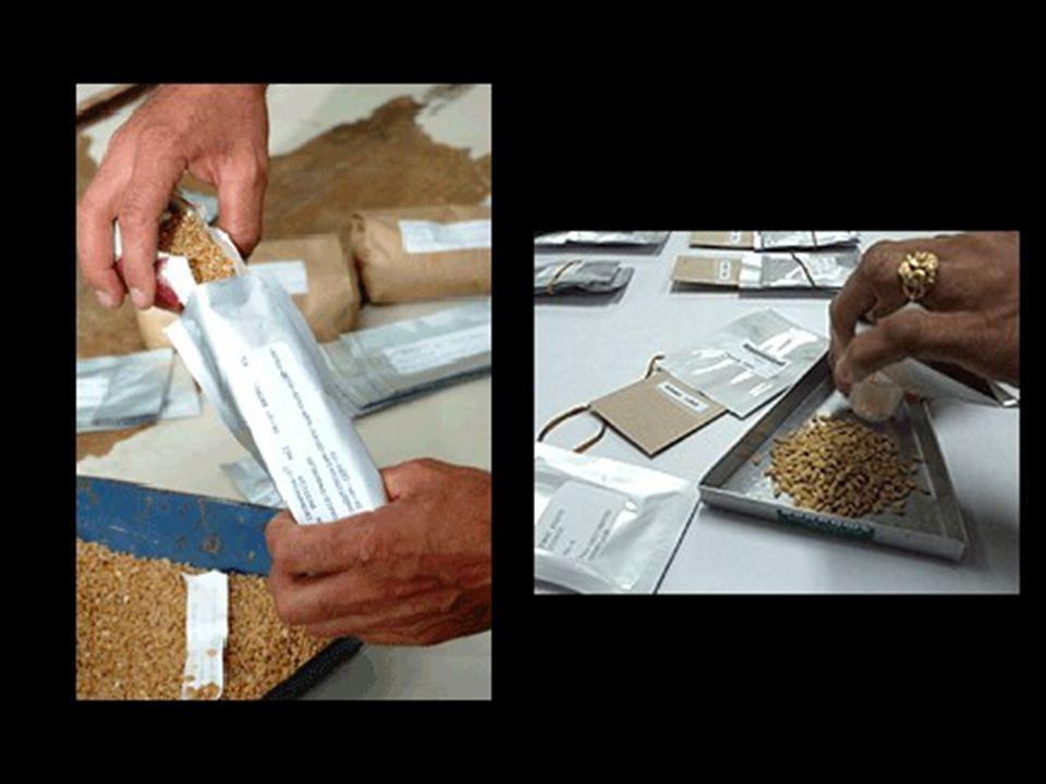 V současné době je po celém světě více než 1.000 semenných bank.