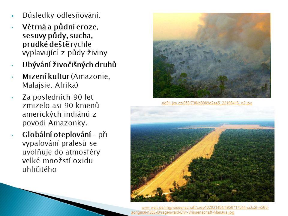  Důsledky odlesňování: • Větrná a půdní eroze, sesuvy půdy, sucha, prudké deště rychle vyplavující z půdy živiny • Ubývání živočišných druhů • Mizení