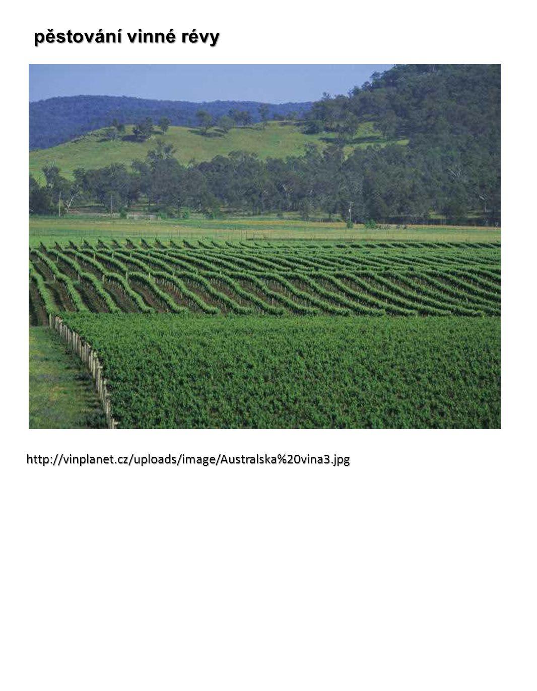 http://vinplanet.cz/uploads/image/Australska%20vina3.jpg pěstování vinné révy