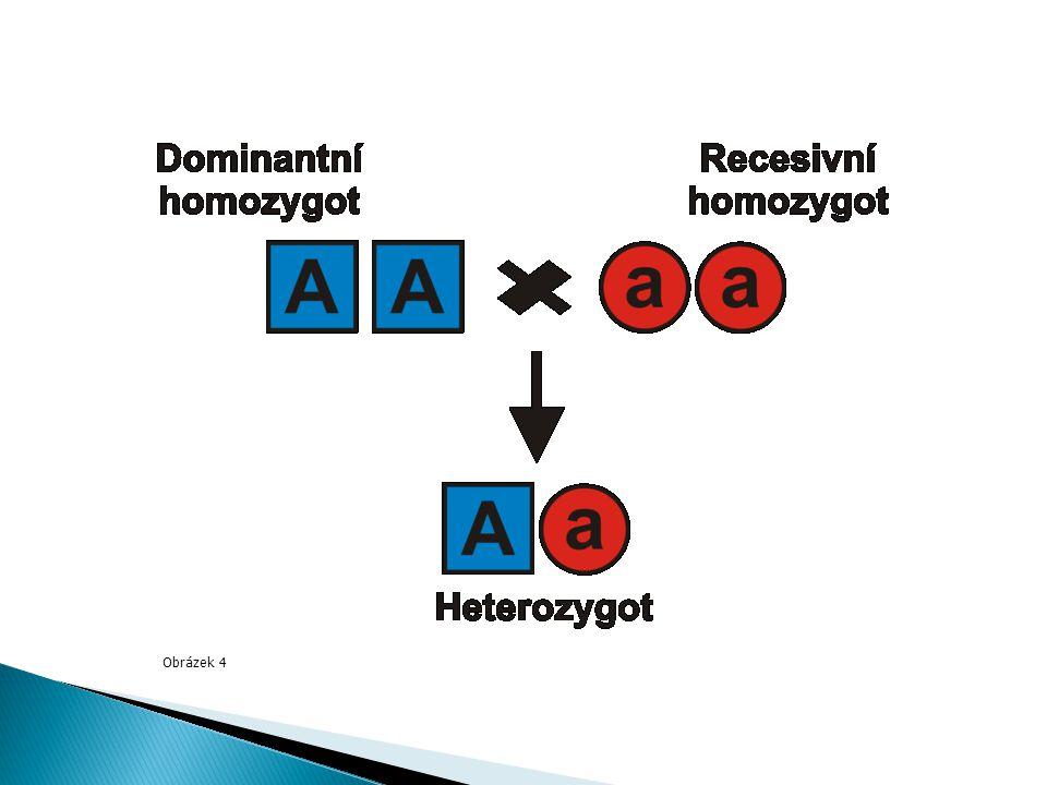  2 významy a) soubor všech genů b) uspořádání párových alel v genu AA, Aa, aa