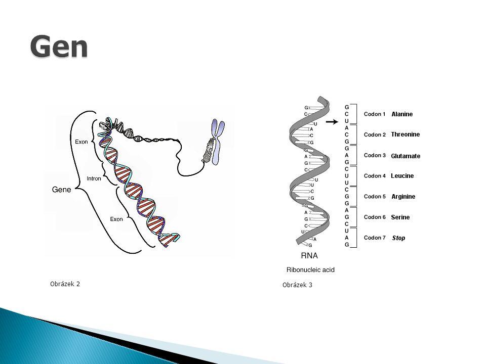  vloha, která se projevila  gen + vliv prostředí