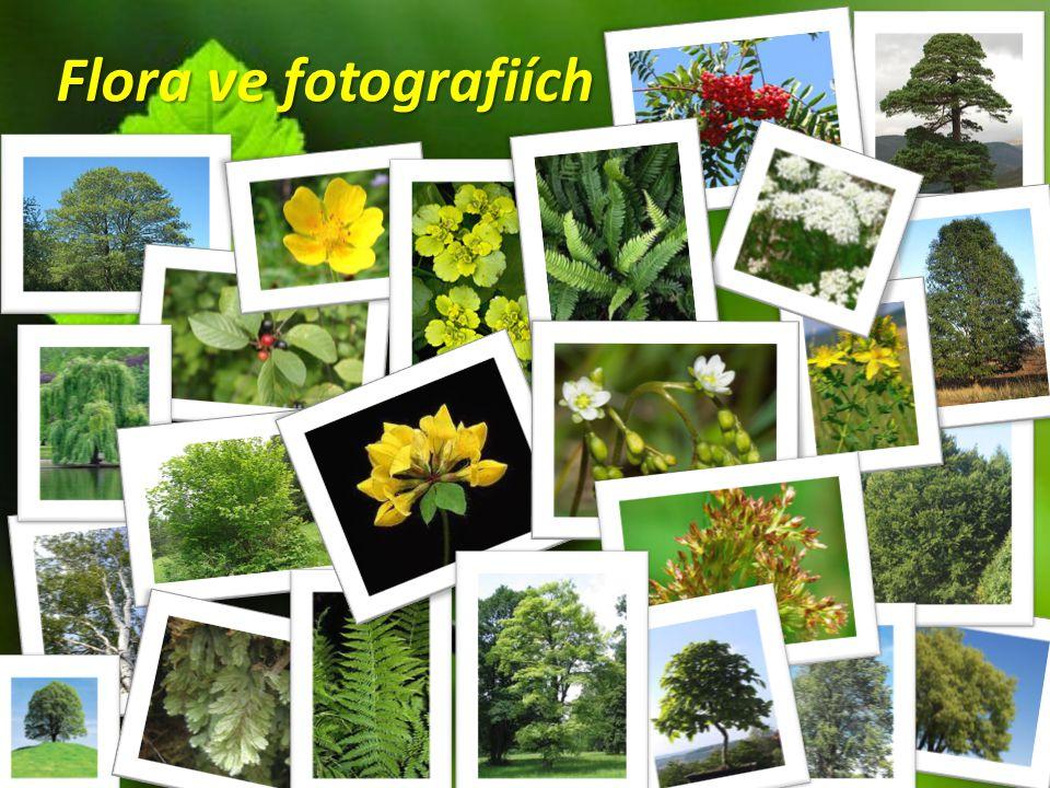 Flora ve fotografiích
