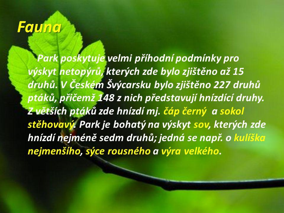 Fauna Park poskytuje velmi příhodní podmínky pro výskyt netopýrů, kterých zde bylo zjištěno až 15 druhů. V Českém Švýcarsku bylo zjištěno 227 druhů pt