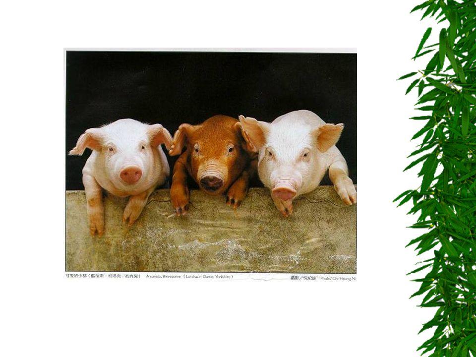 KRÁLÍK  Patří mezi savce  Někdy se chová i jako mazlíček  Chová se na maso  Živí se jetelem, listy pampelišek, mrkví  Je miloučký a hebký  Neroz