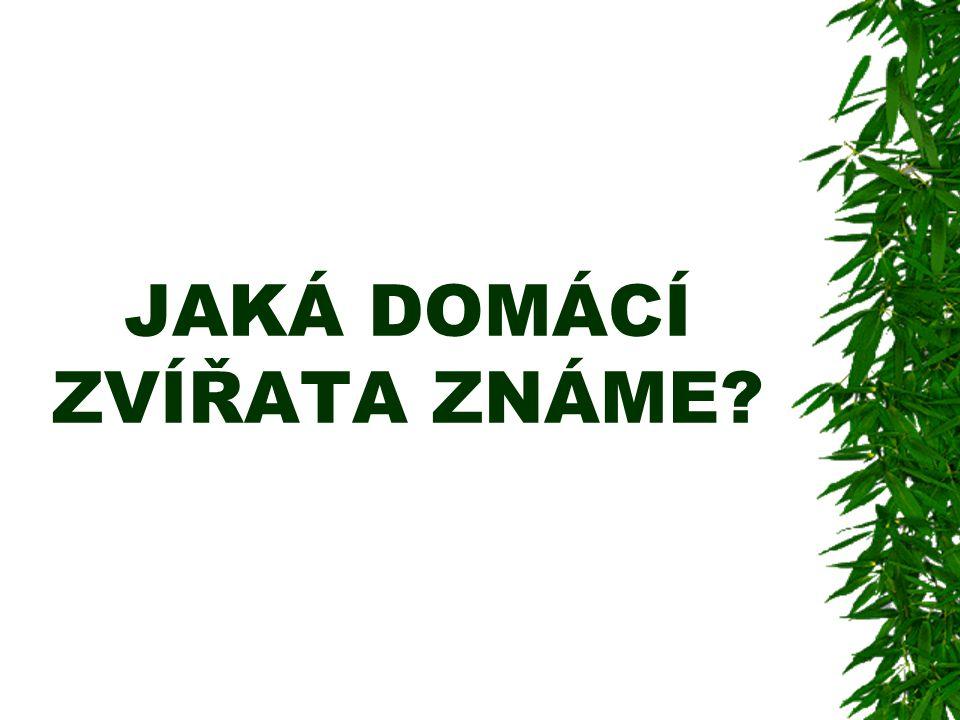 DOMÁCÍ ZVÍŘATA Kamila Kopecká Denisa Brusová