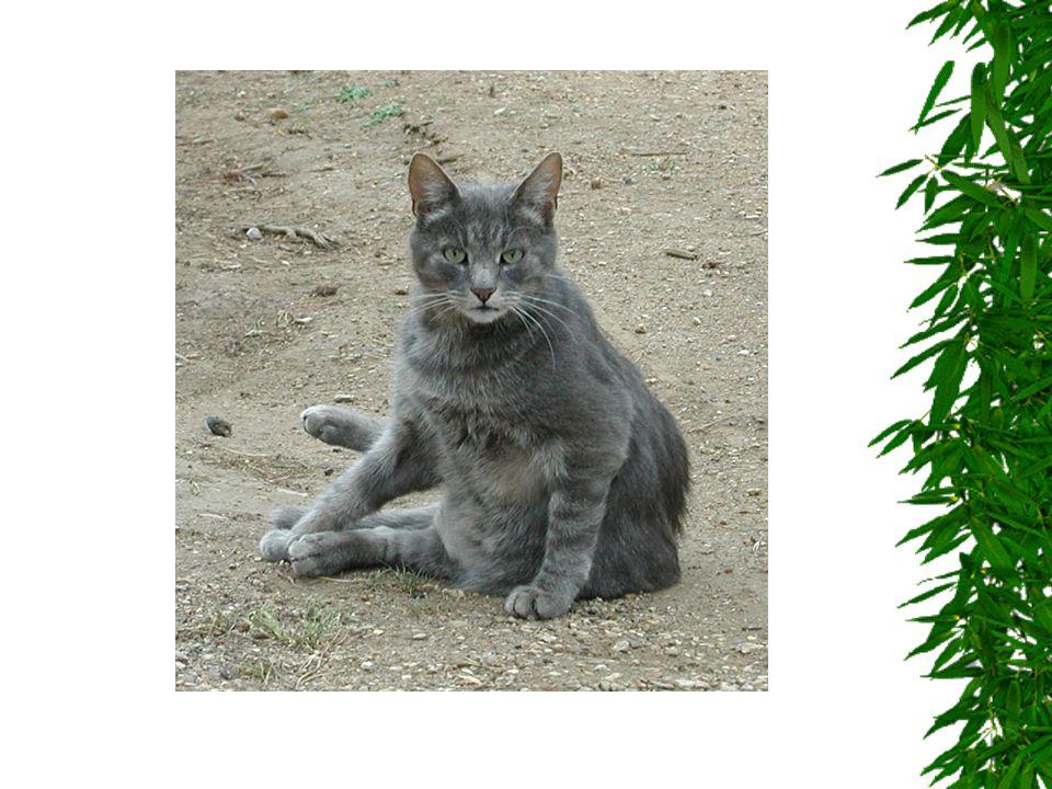 V následující prezentaci Vás seznámíme s některými domácími zvířátky, která se nejčastěji vyskytují na našem venkově.