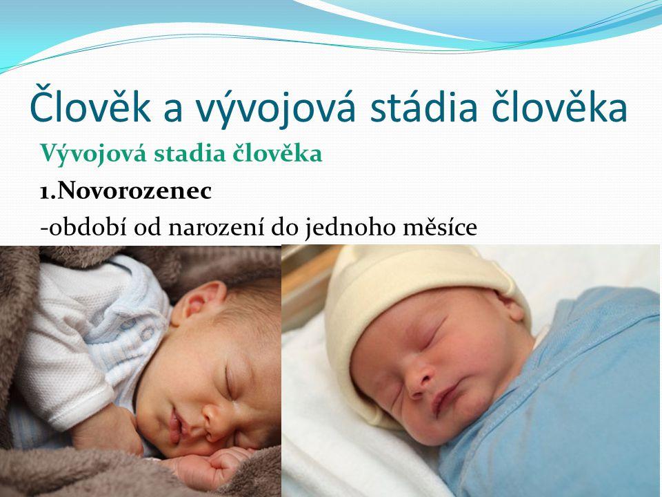 Člověk a vývojová stádia člověka Vývojová stadia člověka 1.Novorozenec -období od narození do jednoho měsíce
