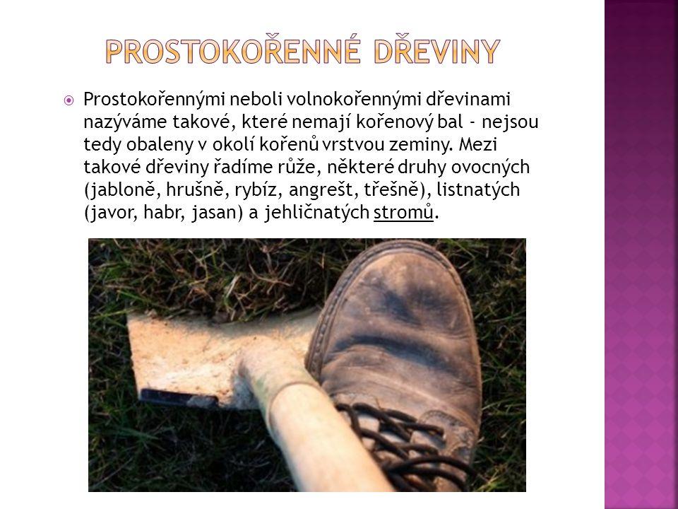 Prostokořennými neboli volnokořennými dřevinami nazýváme takové, které nemají kořenový bal - nejsou tedy obaleny v okolí kořenů vrstvou zeminy. Mezi