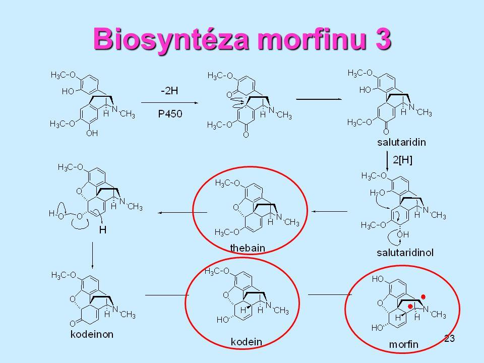 23 Biosyntézamorfinu3 Biosyntéza morfinu 3