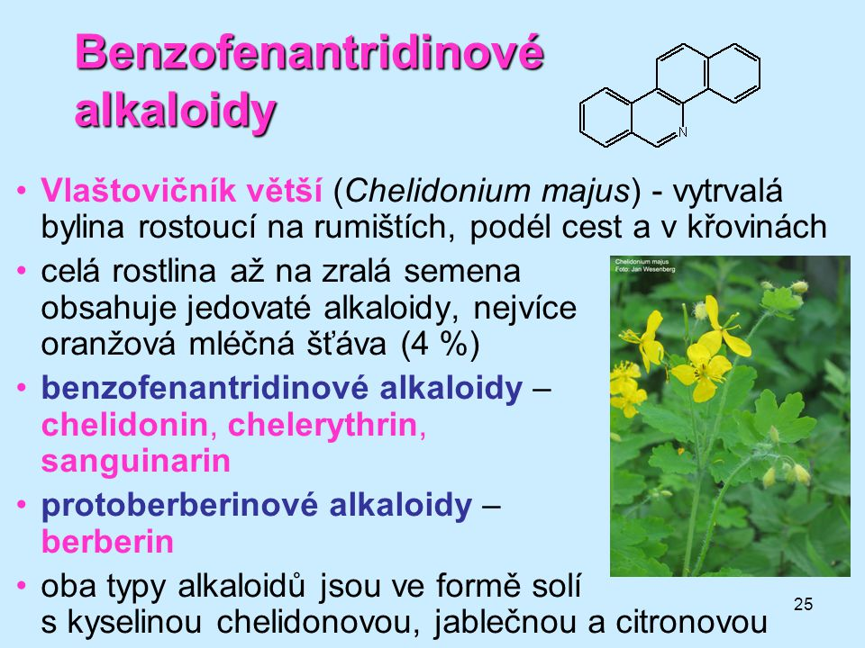 25 Benzofenantridinové alkaloidy •Vlaštovičník větší (Chelidonium majus) - vytrvalá bylina rostoucí na rumištích, podél cest a v křovinách •celá rostl