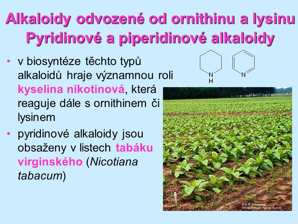 60 Alkaloidy odvozené od ornithinu a lysinu Pyridinové a piperidinové alkaloidy •v biosyntéze těchto typů alkaloidů hraje významnou roli kyselina niko