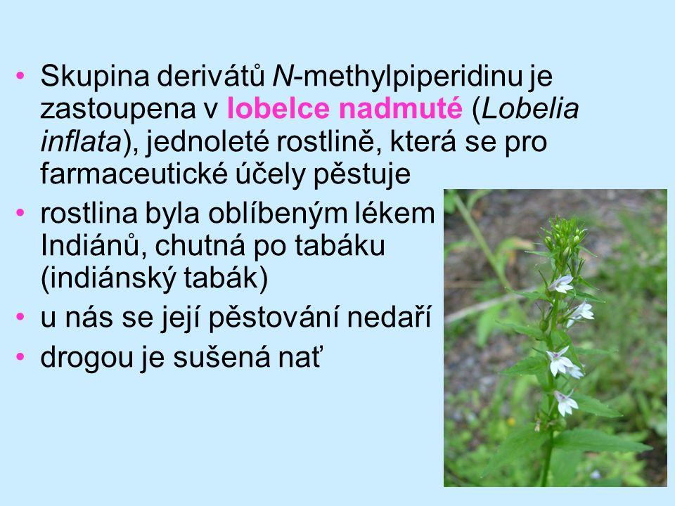 63 •Skupina derivátů N-methylpiperidinu je zastoupena v lobelce nadmuté (Lobelia inflata), jednoleté rostlině, která se pro farmaceutické účely pěstuj