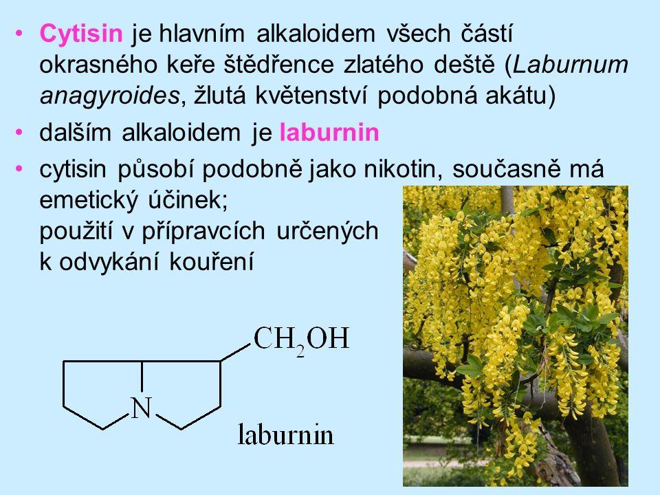 71 •Cytisin je hlavním alkaloidem všech částí okrasného keře štědřence zlatého deště (Laburnum anagyroides, žlutá květenství podobná akátu) •dalším al