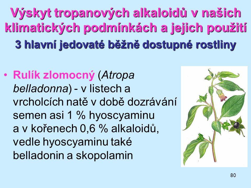 80 Výskyt tropanových alkaloidů v našich klimatických podmínkách a jejich použití 3 hlavní jedovaté běžně dostupné rostliny •Rulík zlomocný (Atropa be