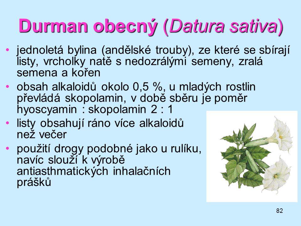 82 Durman obecný (Datura sativa) •jednoletá bylina (andělské trouby), ze které se sbírají listy, vrcholky natě s nedozrálými semeny, zralá semena a ko