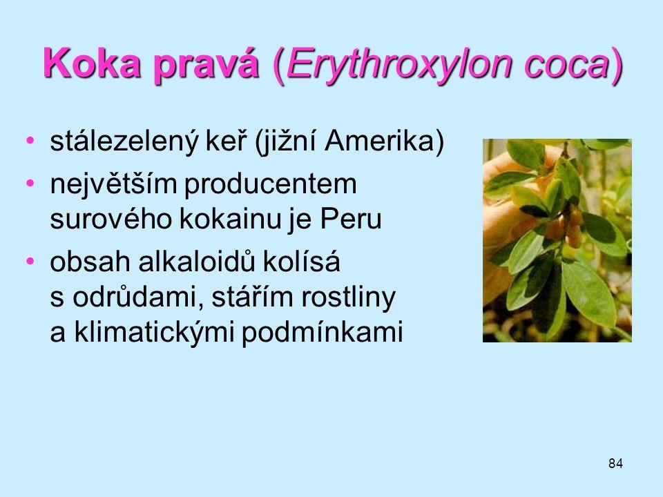 84 Koka pravá (Erythroxylon coca) •stálezelený keř (jižní Amerika) •největším producentem surového kokainu je Peru •obsah alkaloidů kolísá s odrůdami,