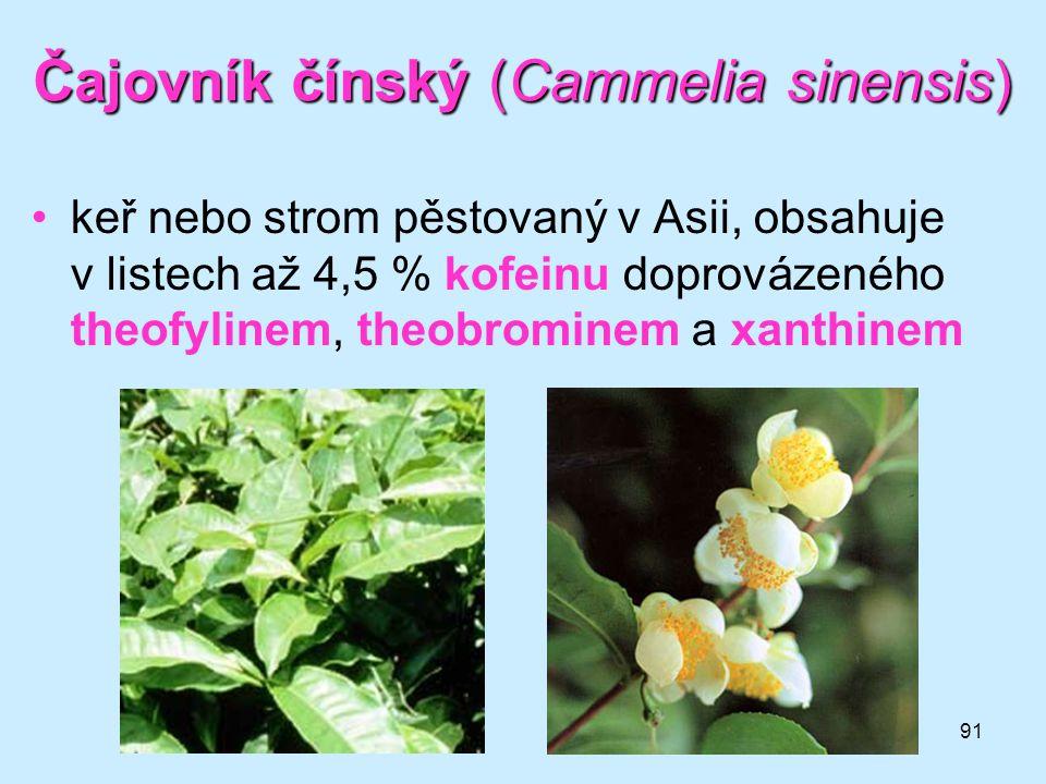 91 Čajovník čínský (Cammelia sinensis) •keř nebo strom pěstovaný v Asii, obsahuje v listech až 4,5 % kofeinu doprovázeného theofylinem, theobrominem a