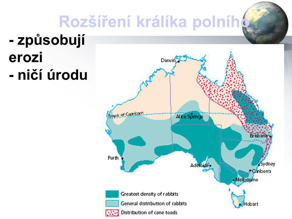 25 Rozšíření králíka polního - způsobují erozi - ničí úrodu