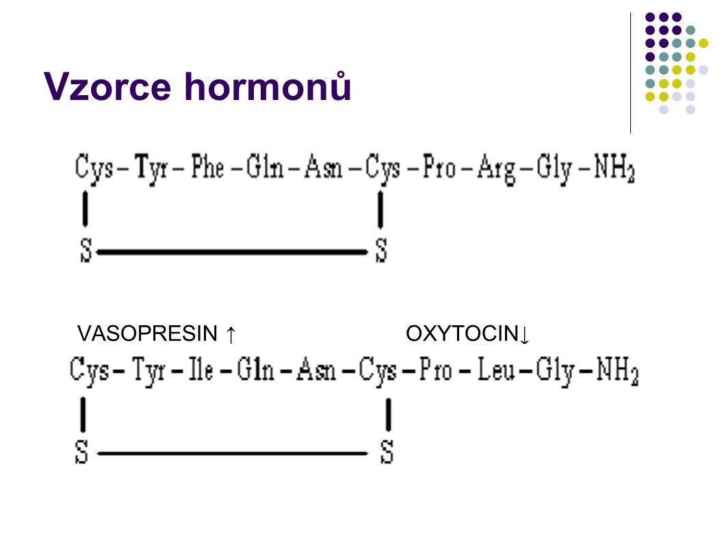 Vzorce hormonů VASOPRESIN ↑ OXYTOCIN↓