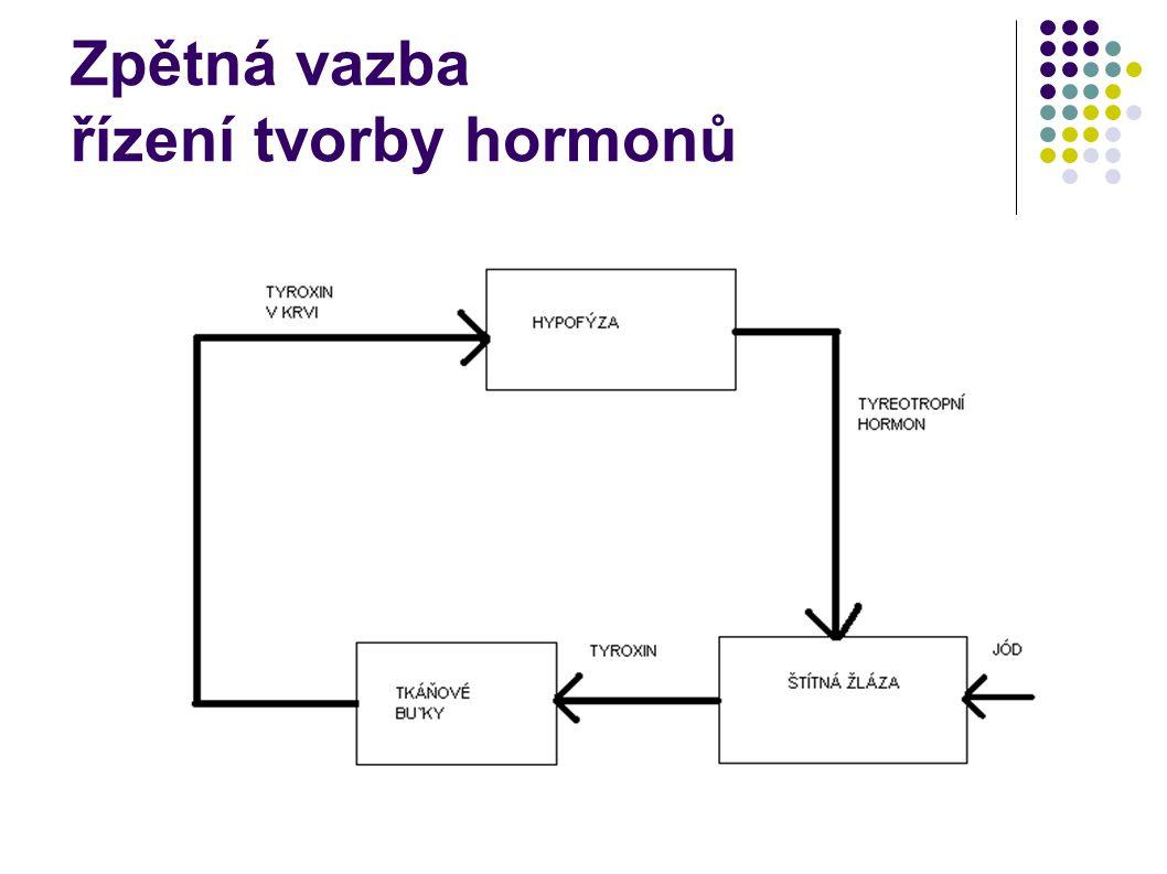 Zpětná vazba řízení tvorby hormonů