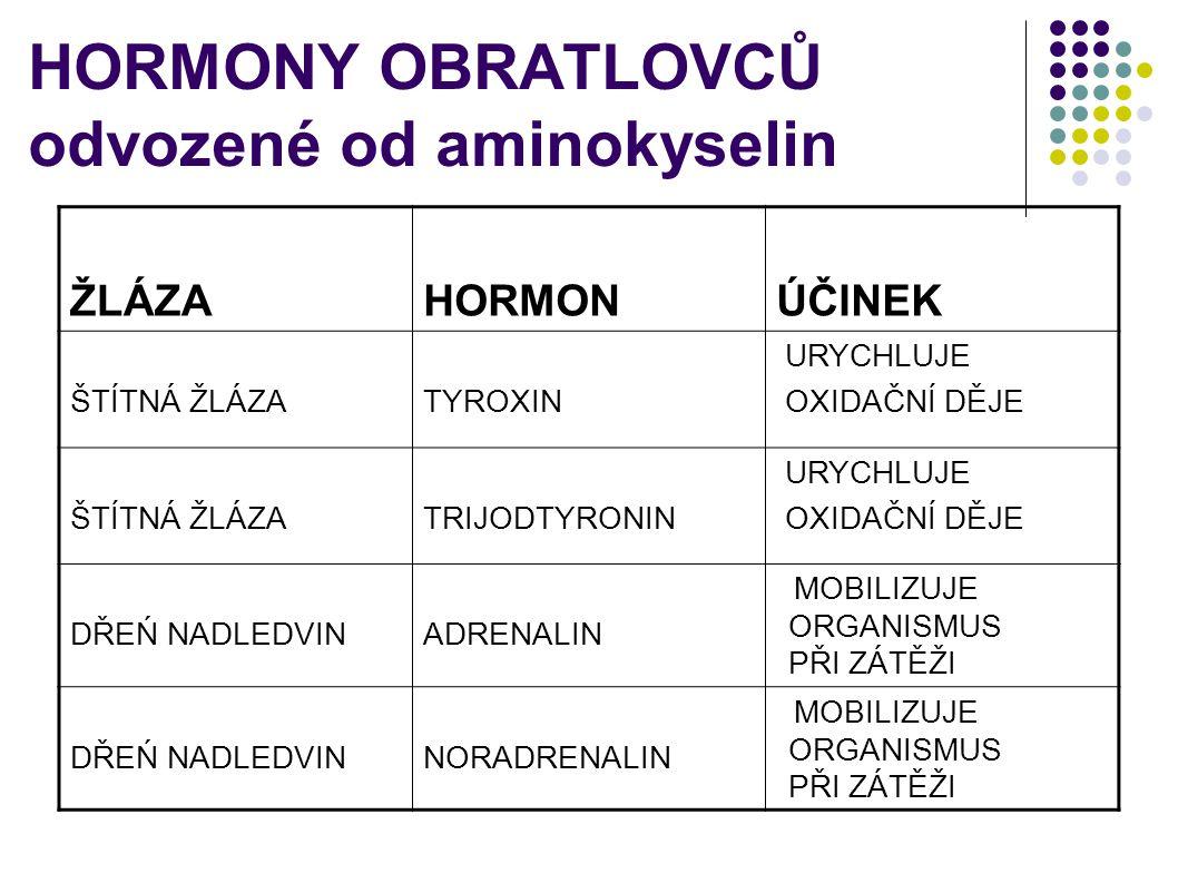 HORMONY OBRATLOVCŮ odvozené od aminokyselin ŽLÁZAHORMONÚČINEK ŠTÍTNÁ ŽLÁZATYROXIN URYCHLUJE OXIDAČNÍ DĚJE ŠTÍTNÁ ŽLÁZATRIJODTYRONIN URYCHLUJE OXIDAČNÍ