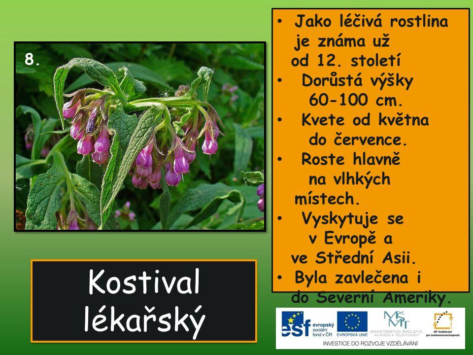 Kostival lékařský • Jako léčivá rostlina je známa už od 12. století • Dorůstá výšky 60-100 cm. • Kvete od května do července. • Roste hlavně na vlhkýc