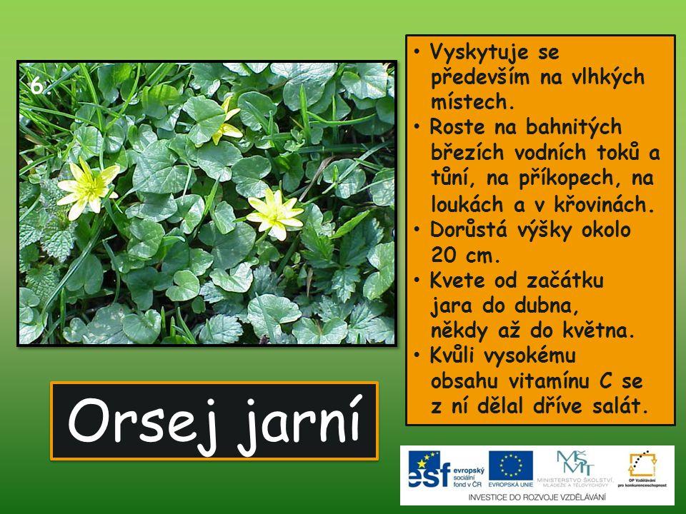 Orsej jarní • Vyskytuje se především na vlhkých místech. • Roste na bahnitých březích vodních toků a tůní, na příkopech, na loukách a v křovinách. • D