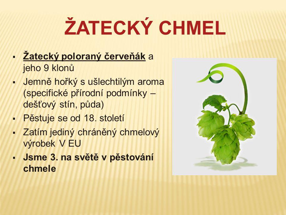 ŽATECKÝ CHMEL  Žatecký poloraný červeňák a jeho 9 klonů  Jemně hořký s ušlechtilým aroma (specifické přírodní podmínky – dešťový stín, půda)  Pěstu