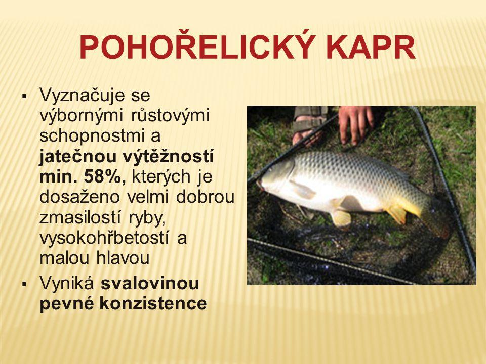 POHOŘELICKÝ KAPR  Vyznačuje se výbornými růstovými schopnostmi a jatečnou výtěžností min. 58%, kterých je dosaženo velmi dobrou zmasilostí ryby, vyso