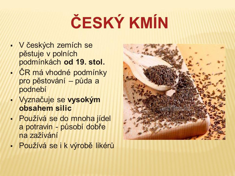 ČESKÝ KMÍN  V českých zemích se pěstuje v polních podmínkách od 19. stol.  ČR má vhodné podmínky pro pěstování – půda a podnebí  Vyznačuje se vysok
