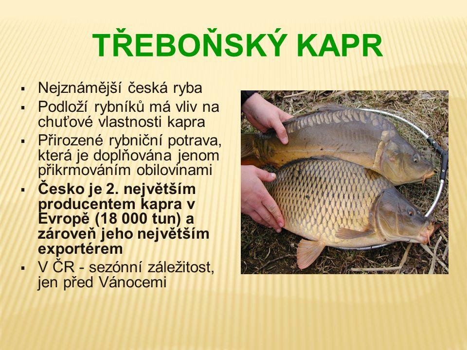 TŘEBOŇSKÝ KAPR  Nejznámější česká ryba  Podloží rybníků má vliv na chuťové vlastnosti kapra  Přirozené rybniční potrava, která je doplňována jenom