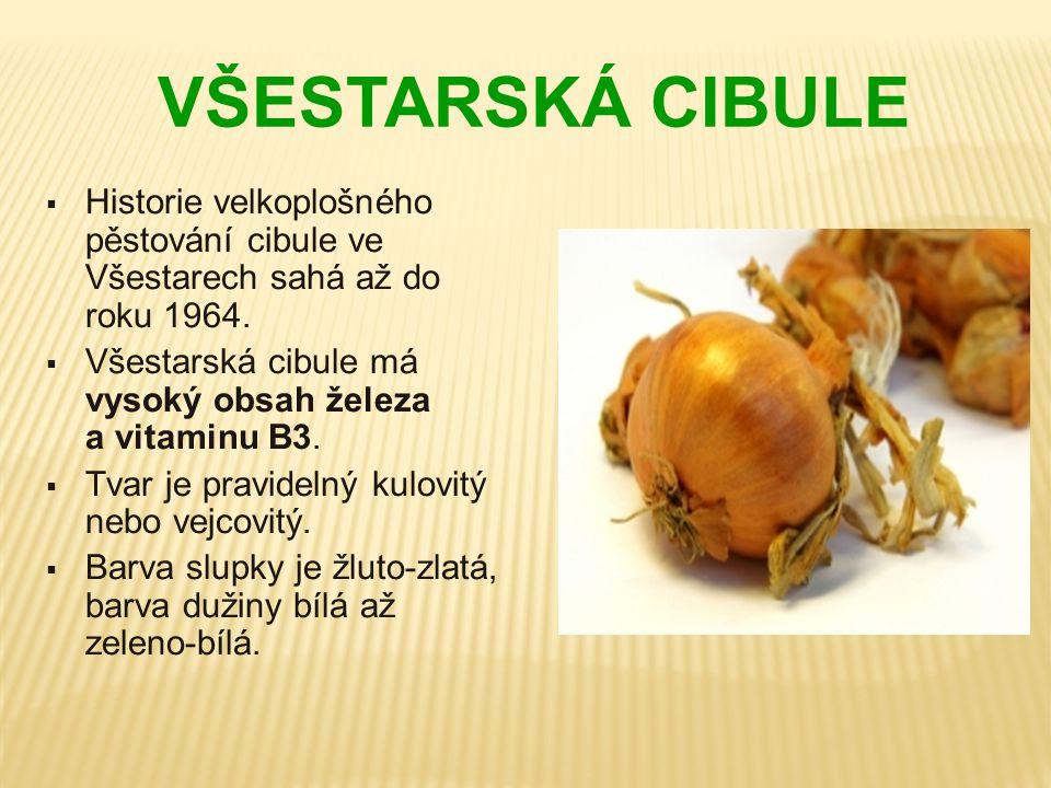 VŠESTARSKÁ CIBULE  Historie velkoplošného pěstování cibule ve Všestarech sahá až do roku 1964.  Všestarská cibule má vysoký obsah železa a vitaminu