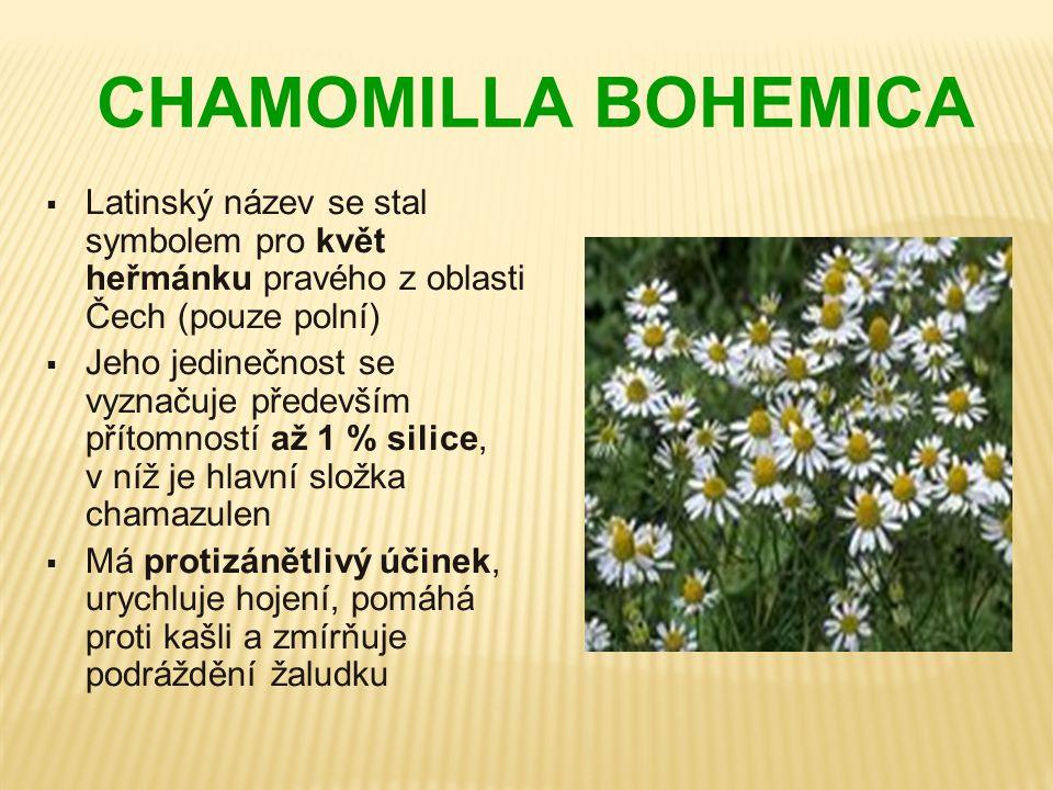 CHAMOMILLA BOHEMICA  Latinský název se stal symbolem pro květ heřmánku pravého z oblasti Čech (pouze polní)  Jeho jedinečnost se vyznačuje především