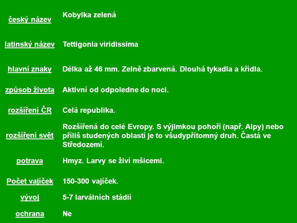 český název Kobylka zelená latinský názevTettigonia viridissima hlavní znakyDélka až 46 mm.