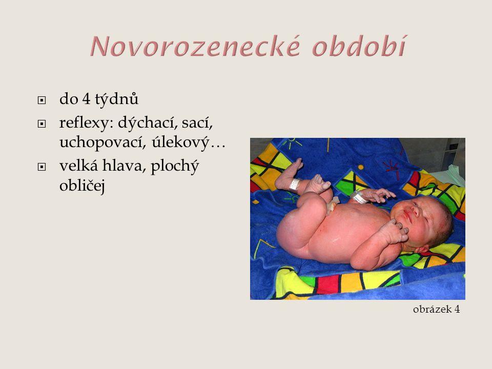  do 4 týdnů  reflexy: dýchací, sací, uchopovací, úlekový…  velká hlava, plochý obličej obrázek 4