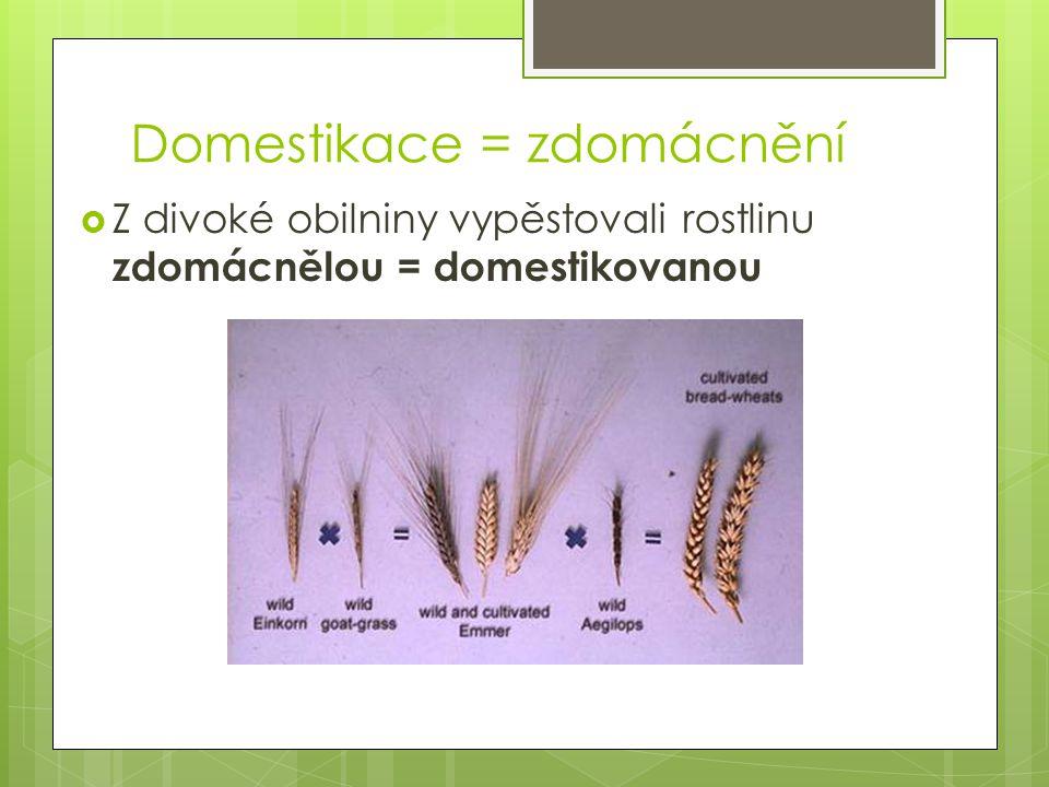 Domestikace = zdomácnění  Z divoké obilniny vypěstovali rostlinu zdomácnělou = domestikovanou
