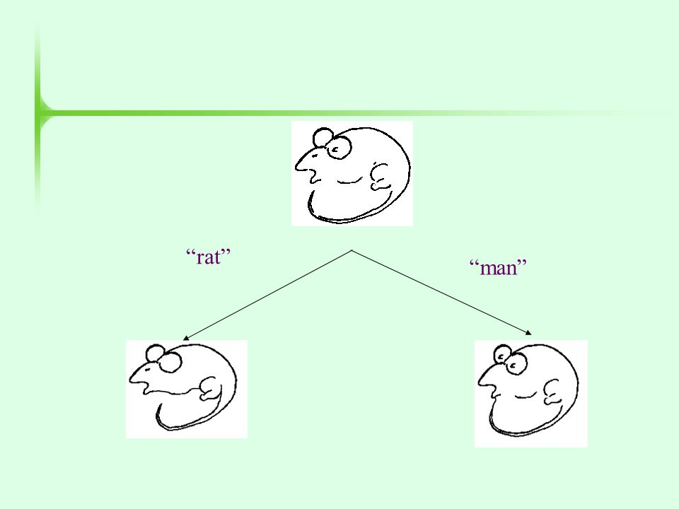 """man"" ""rat"""
