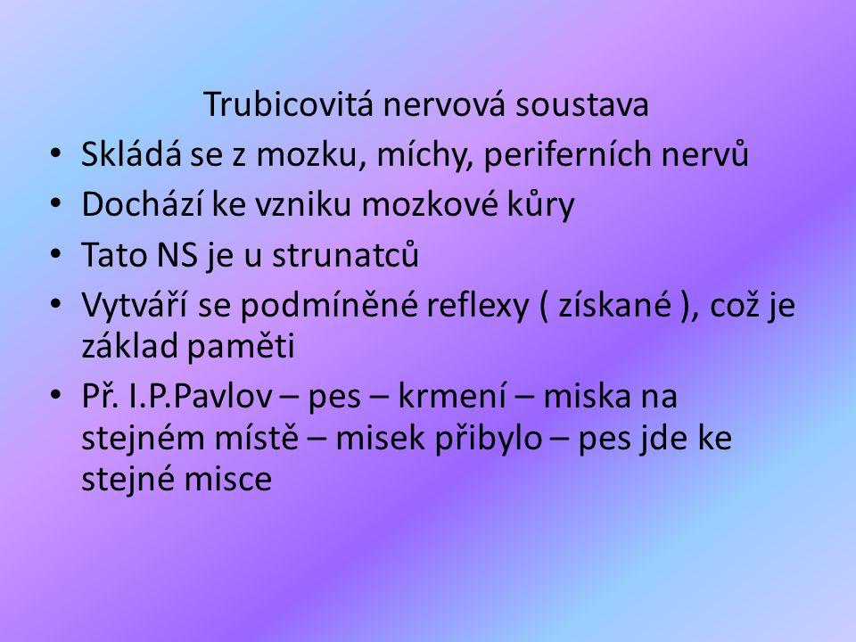 Trubicovitá nervová soustava • Skládá se z mozku, míchy, periferních nervů • Dochází ke vzniku mozkové kůry • Tato NS je u strunatců • Vytváří se podm