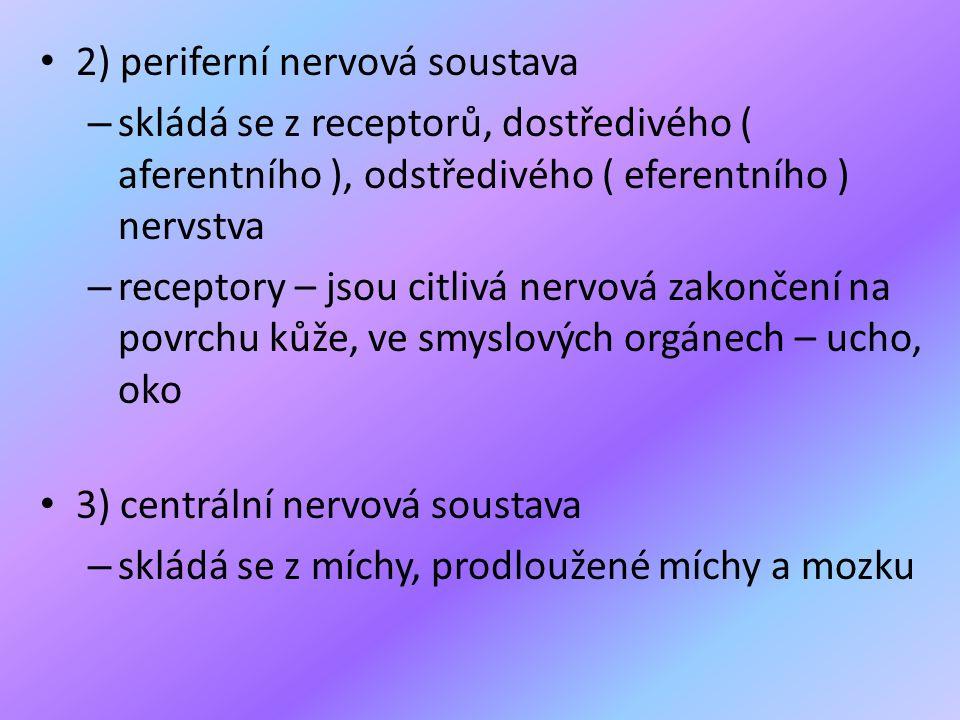• 2) periferní nervová soustava – skládá se z receptorů, dostředivého ( aferentního ), odstředivého ( eferentního ) nervstva – receptory – jsou citliv