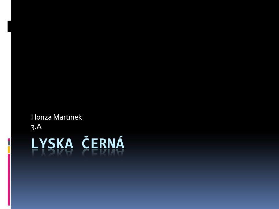 Honza Martinek 3.A