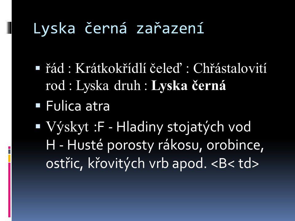 Lyska černá zařazení  řád : Krátkokřídlí čeleď : Chřástalovití rod : Lyska druh : Lyska černá  Fulica atra  Výskyt : F - Hladiny stojatých vod H - Husté porosty rákosu, orobince, ostřic, křovitých vrb apod.