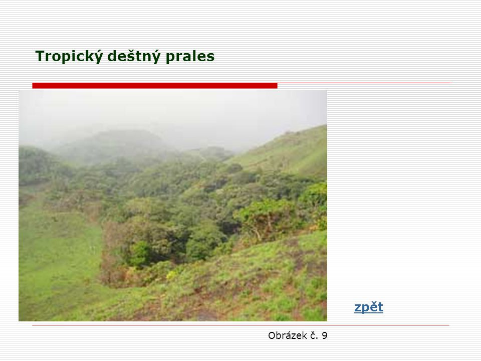 Tropický deštný prales zpět Obrázek č. 9