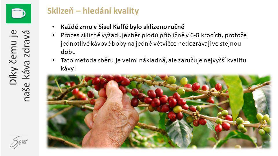 1 Díky čemu je naše káva zdravá Sklizeň – hledání kvality • Každé zrno v Sisel Kaffé bylo sklizeno ručně • Proces sklizně vyžaduje sběr plodů přibližně v 6-8 krocích, protože jednotlivé kávové boby na jedné větvičce nedozrávají ve stejnou dobu • Tato metoda sběru je velmi nákladná, ale zaručuje nejvyšší kvalitu kávy!