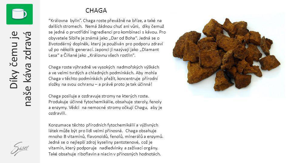 """1 CHAGA """"Královna bylin"""". Chaga roste převážně na bříze, a také na dalších stromech. Nemá žádnou chuť ani vůni, díky čemuž se jedná o prvotřídní ingre"""
