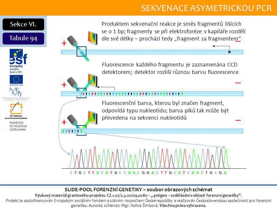 SEKVENACE ASYMETRICKOU PCR Sekce VI.